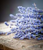 Lavender Fragrance Oil - Premium Grade