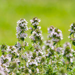 Patchouli Blossom Fragrance Oil-Premium Grade