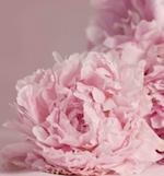 Peony & Blush Suede Fragrance Oil - Premium Grade