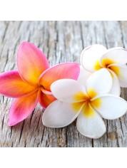 Frangipani Blossom Fragrance Oil - Premium Grade